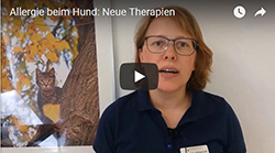Allergie Hund Neue Therapien